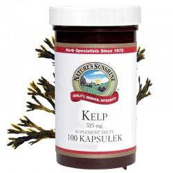 KELP WODOROSTY MORSKIE (Kelp) - bogate źródło jodu, witamin i minerałów