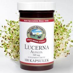 LUCERNA (Alfalfa) - pobudza układ krążenia, zaopatruje organizm w niezbędne składniki odżywcze